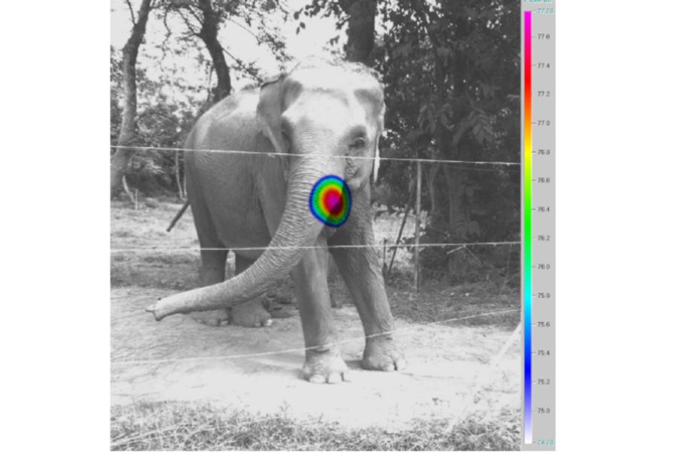 Das Bild einer akustischen Kamera zeigt in bunten Farben, woher die Laute eines Elefanten kommen.