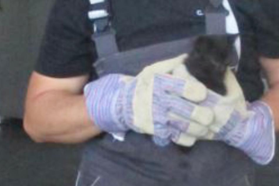 Erst ein Mechaniker kann dieses verlassene Kätzchen retten