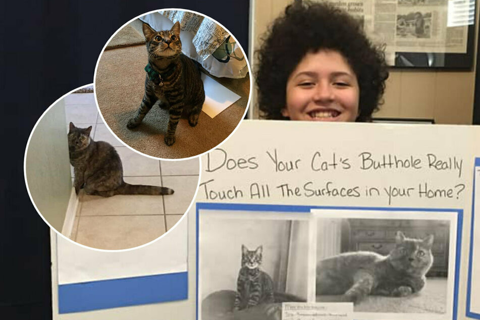 Kid's science project explores whether cats' buttholes touch all surfaces in your home