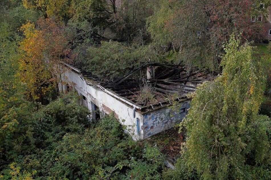 Die Ruine eines Gebäudes ist von Bäumen umwachsen. Hier wurde die Leiche eines Mädchens gefunden.