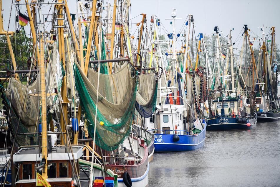 Weniger Krabben, Hering und Dorsch? Fischerei in großer Krise