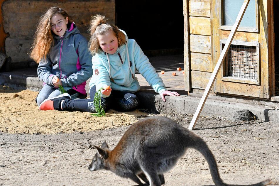 Die Zwillinge Anika und Alina Melzer (10) wollen das Wallaby füttern.
