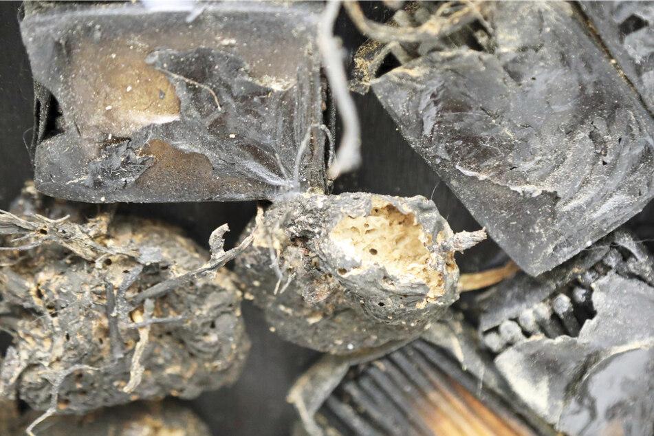 Hier haben sich die Brotkäfer durch die angekohlten Kartoffeln auf dem Streichholzaltar gefressen.