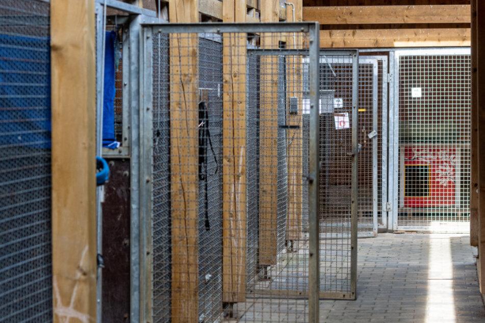 Hund und Katze als Corona-Partner? Das steckt hinter den leeren Käfigen in Tierheimen