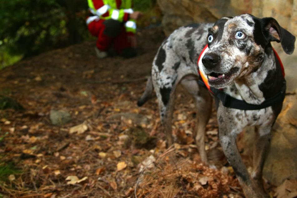 Tierischer Einsatz im Elbsandsteingebirge: Diese Hunde sollen Menschen retten