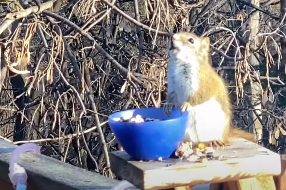 The squirrel in a drunken stupor.