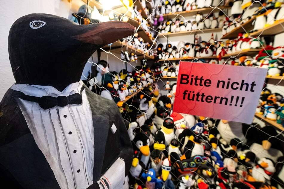 Whether it's a plush toy, collector's figure, or ties - the Penguin Museum Cuxhaven is teeming with people wearing tails.