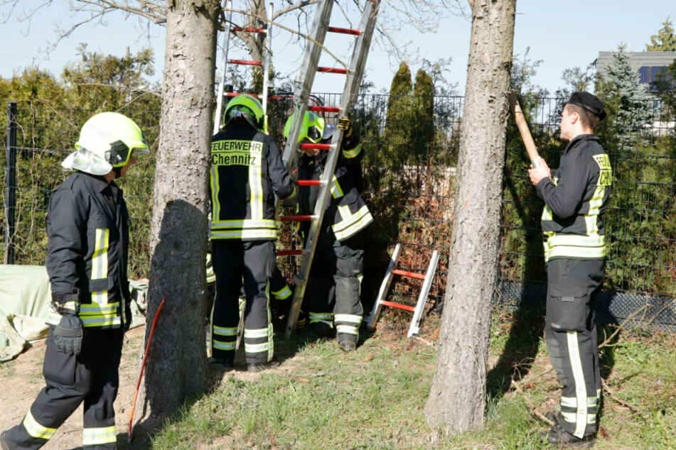 Die Feuerwehr legte eine Leiter an und versuchte die Katze vom Baum zu holen.