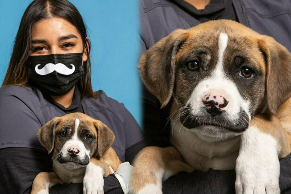 Hilarious mustachioed mutt with a sad story gets a new home!