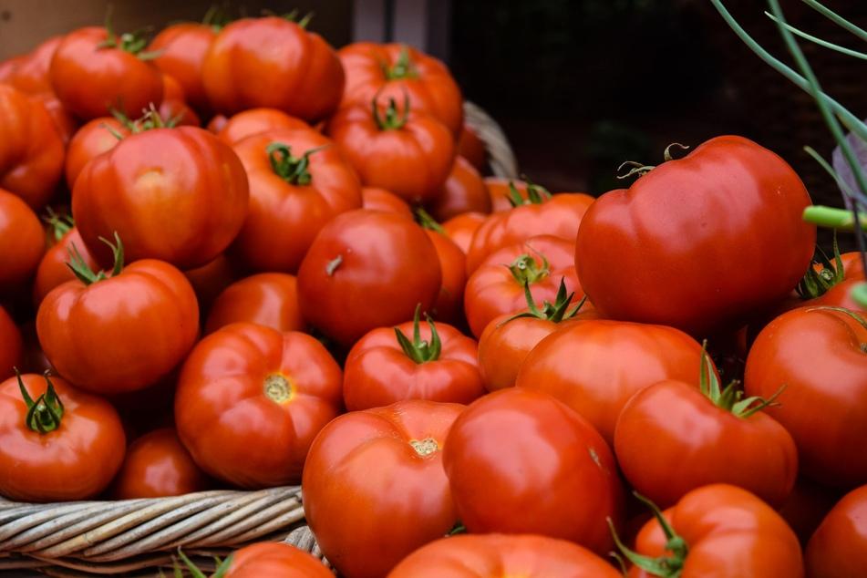 Im Sommer werden oft mehr der Tomaten reif, als man auf die Schnelle verarbeiten kann.