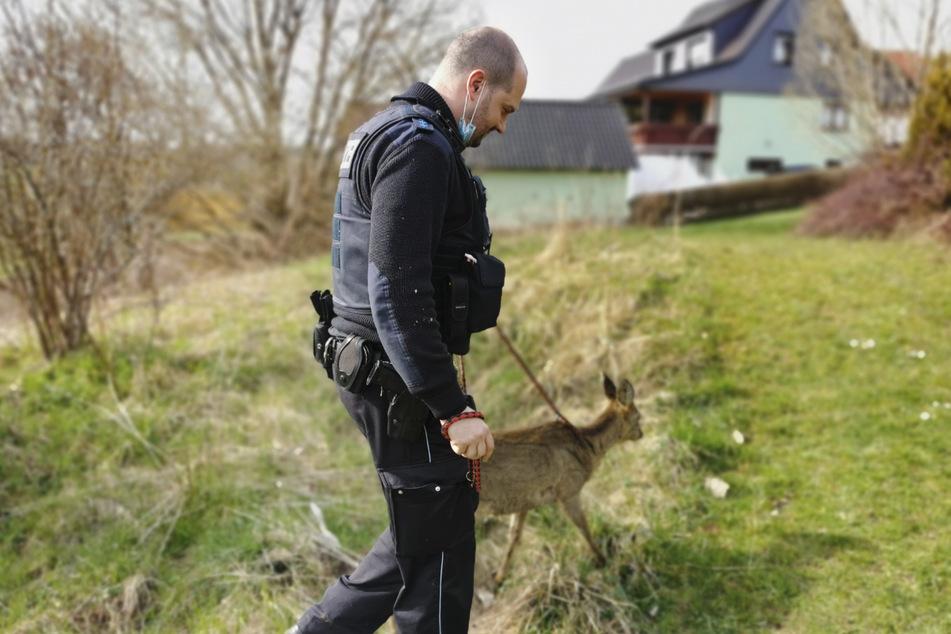 Ein Polizist führt das Reh an einer Leine.