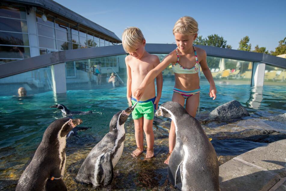 Hier können Familien einen tollen Ferientag verbringen