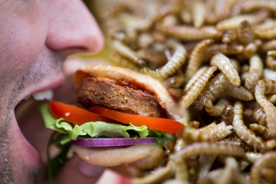 """Hamburg: Ist der """"gesunde"""" Insekten-Snack doch nicht so gut, wie gedacht?"""