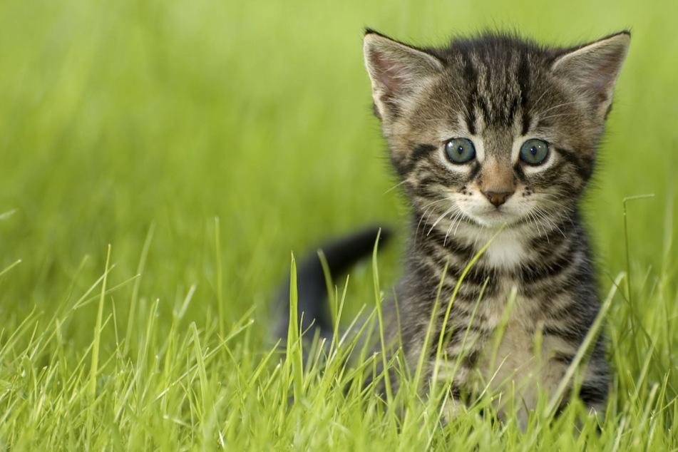 Kleines Pfötchen im Eisen: Katze durch verbotene Falle schwer verletzt