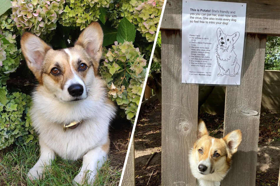 Dog misses greeting neighbors during pandemic, so owner puts up a heartwarming sign
