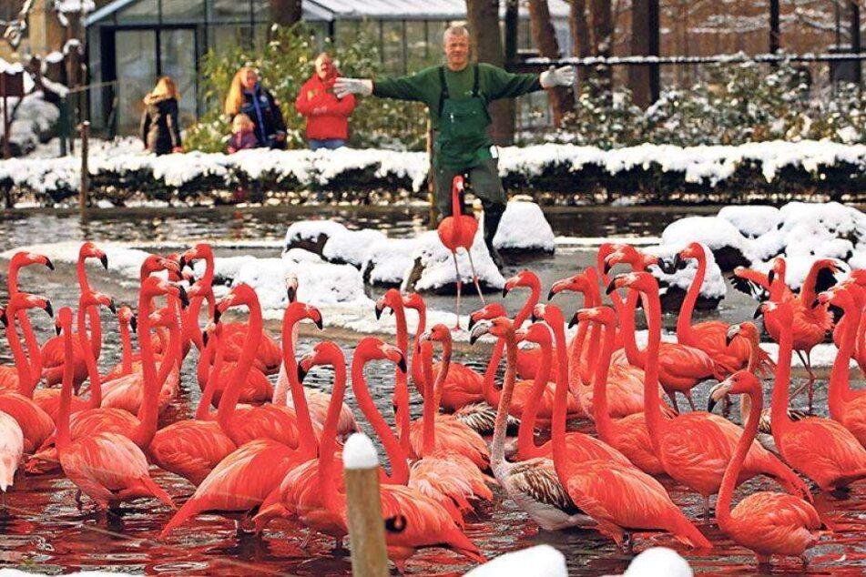 Bibberfrei! Flamingos sind im Warmen