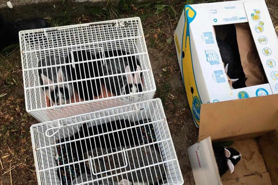Die ausgesetzten Kaninchen befanden sich in Käfigen und Kartons.