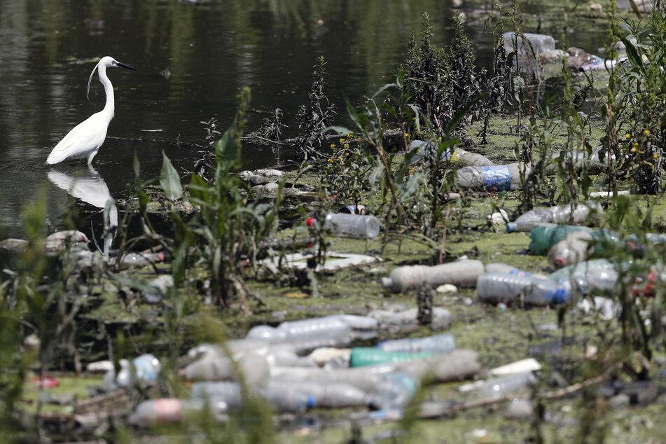 Serbien, Belgrad: Ein weißer Reiher steht zwischen weggeworfenen Plastikflaschen und Abfall am Ufer der Save. (Archivbild)