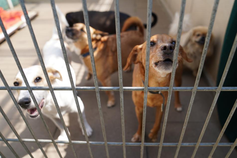 Hund zwei Stunden im überhitzten Auto gefangen, Polizei schlägt Scheibe ein
