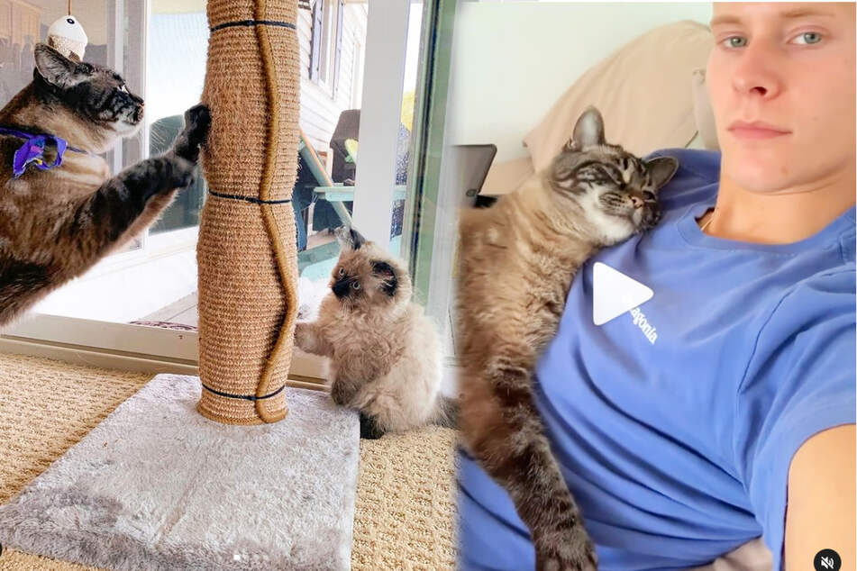 """You've got a friend in me"": Pet owner helps his struggling cat with a cuddly companion"