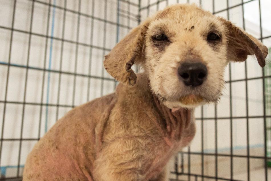 Wegen seines Aussehens ignoriert: Tierschützer finden Hundewelpen verlassen auf Straße