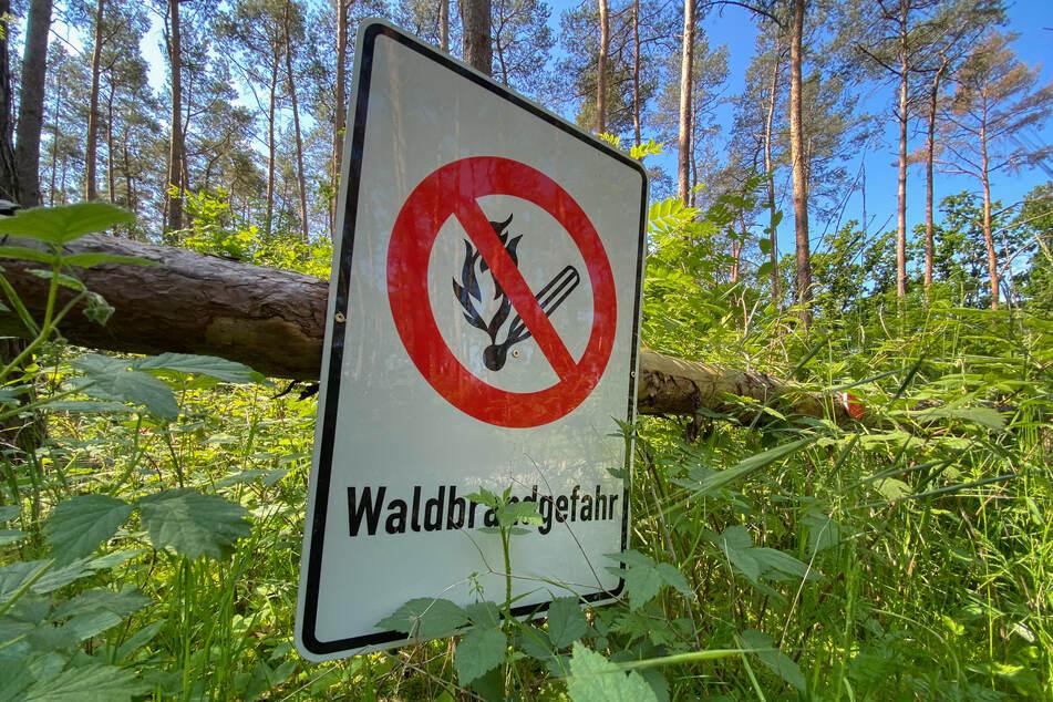 Die Zahl der Waldbrände in Sachsen sei Dank des eher nass-kalten Frühjahrs zurückgegangen.