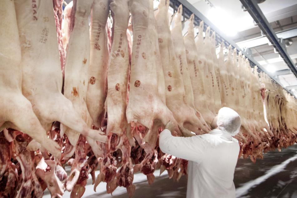 Frisch geschlachtete Schweine hängen in einem Kühlhaus des Fleischunternehmens Tönnies. (Archivbild)