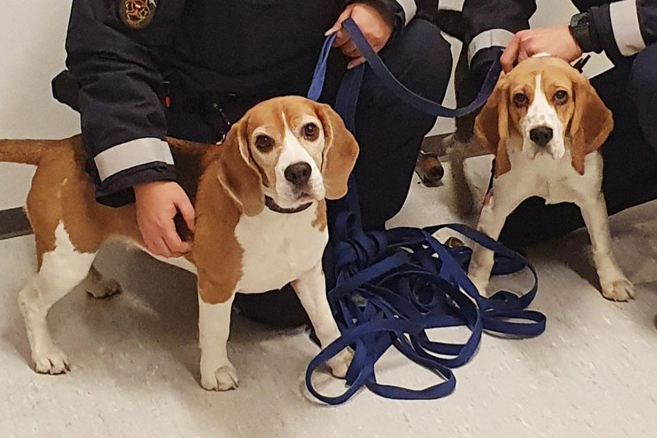 """Hunde """"festgenommen"""", Ausreißer zeigen sich kooperativ"""