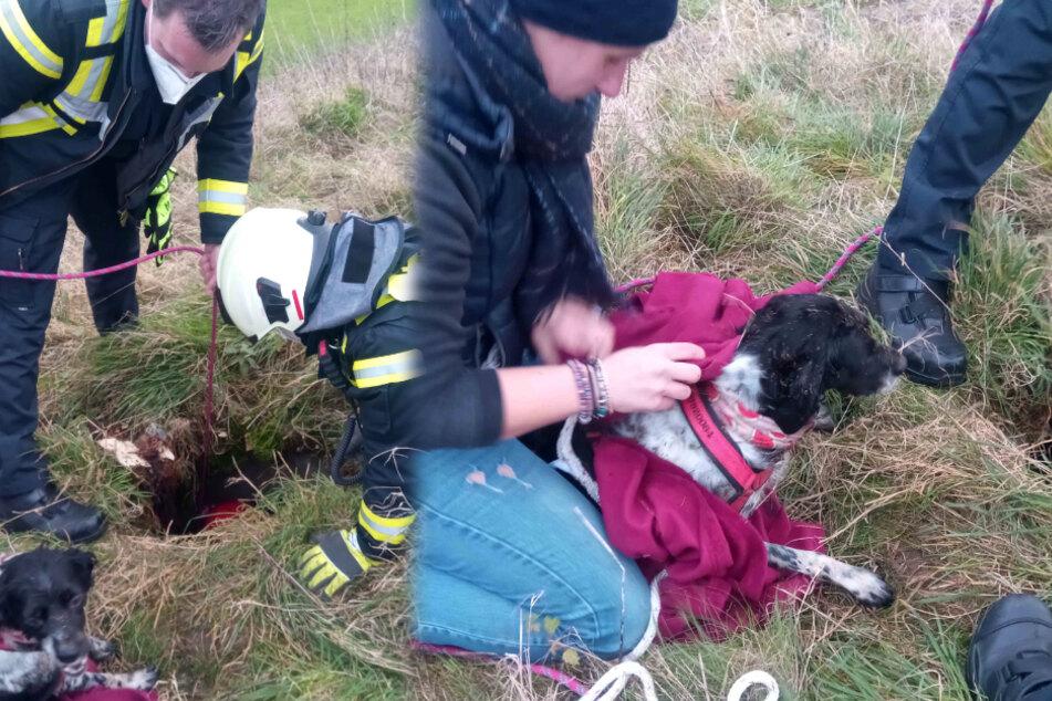 Das Tier wurde mit einer Leine, die am Tragegeschirr befestigt wurde, wieder in die Höhe befördert.