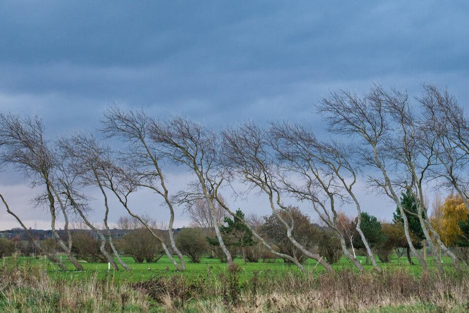 Sogar orkanartige Böen werden erwartet: Den Sachsen stehen stürmische Tage bevor. (Symbolbild)
