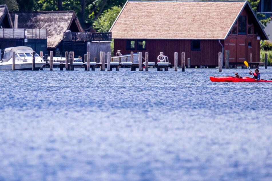Blaualgen-Alarm an Ostsee-Stränden und am Schweriner See