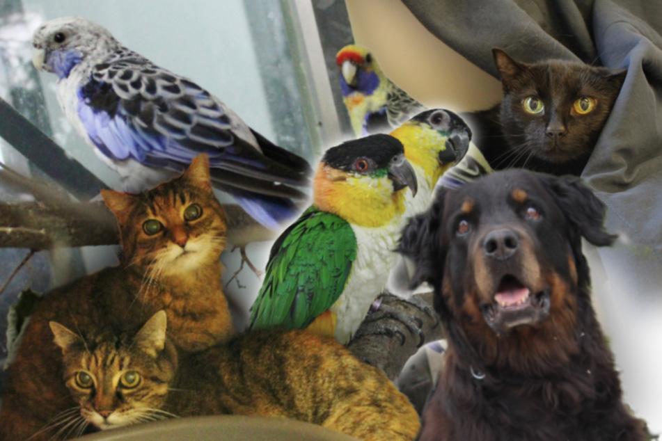 8 besondere Tiere: Diese Hunde, Katzen und Papageien suchen endlich ein Zuhause