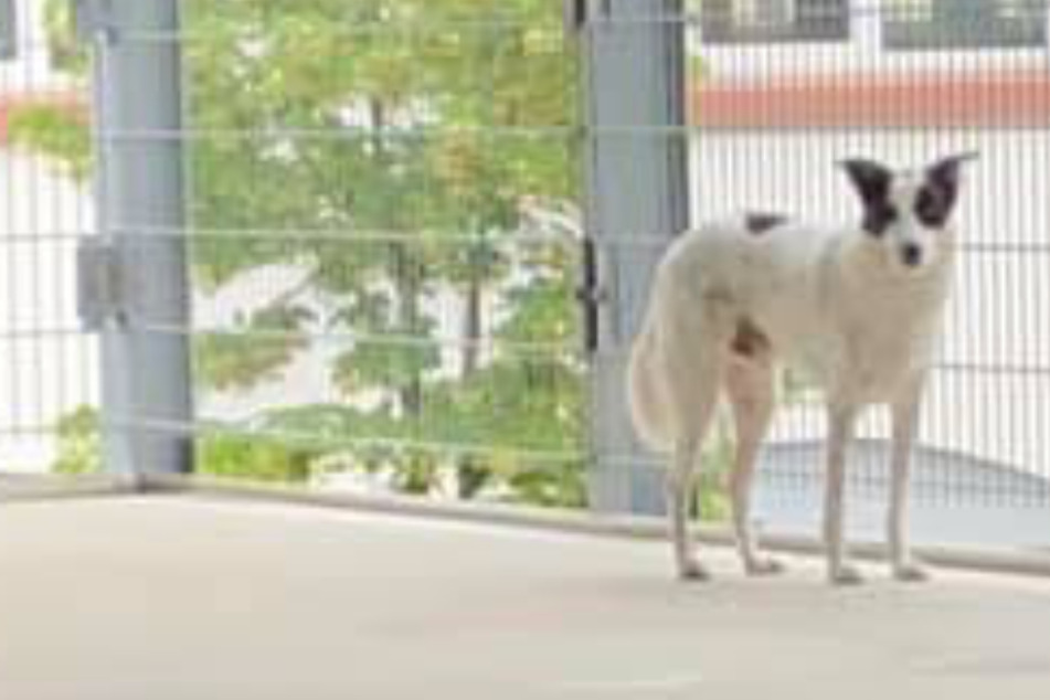 Hund steht mutterseelenallein in Parkhaus: So wurde er gerettet