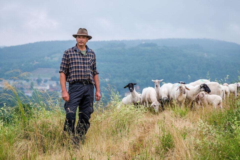 Wanderschäfer Jan Raupach (52) bangt um seine Existenz, wenn sich die Wölfe im westlichen Erzgebirge ansiedeln.