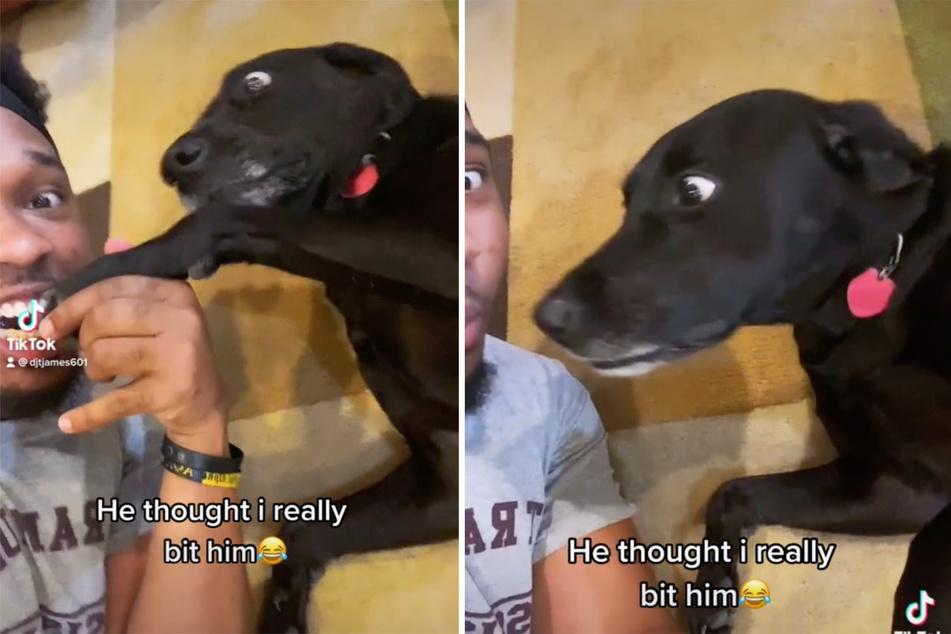 Hund glaubt, Herrchen würde ihm die Pfote abbeißen und zeigt super lustige Reaktion