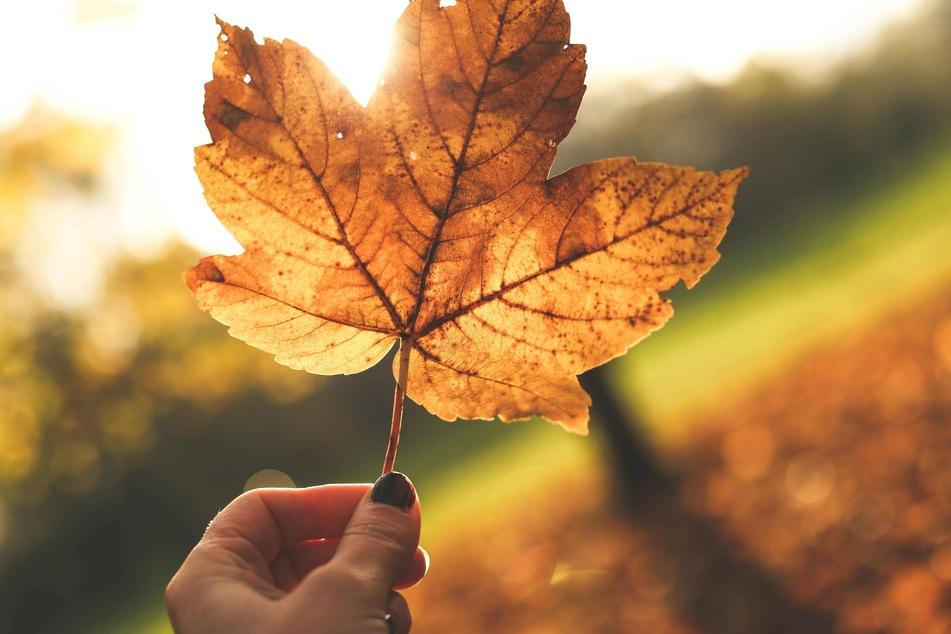 Den Garten winterfest machen: Das ist jetzt im Herbst zu tun