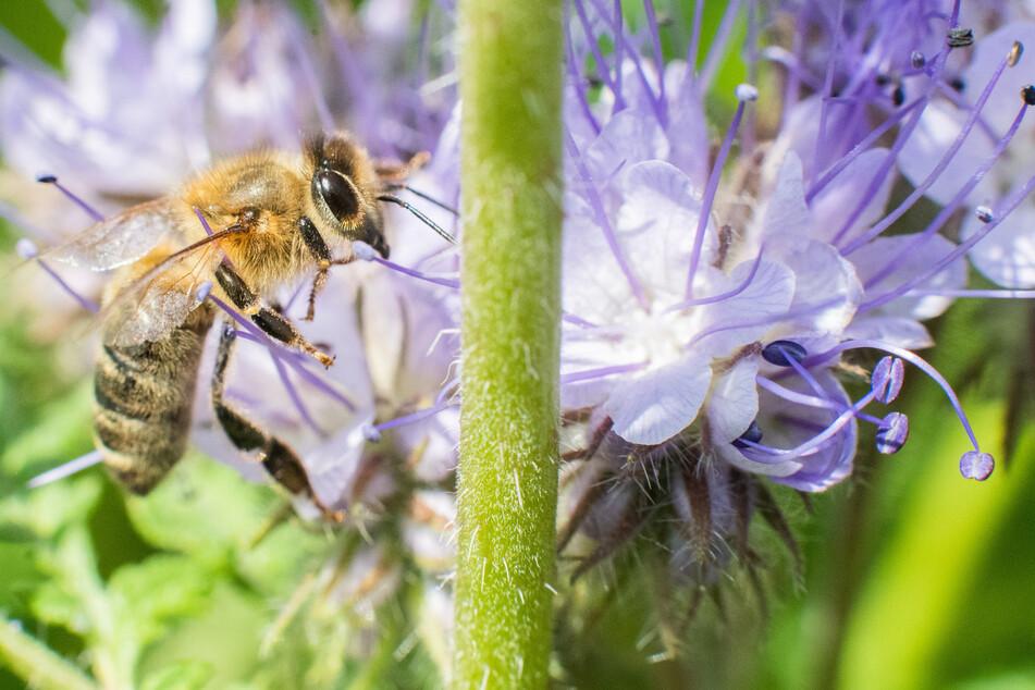 Das Massensterben von Arten geht weit über das uns bekannte Bienensterben hinaus. Selbst jede Alge hat ihren Platz im Ökosystem.