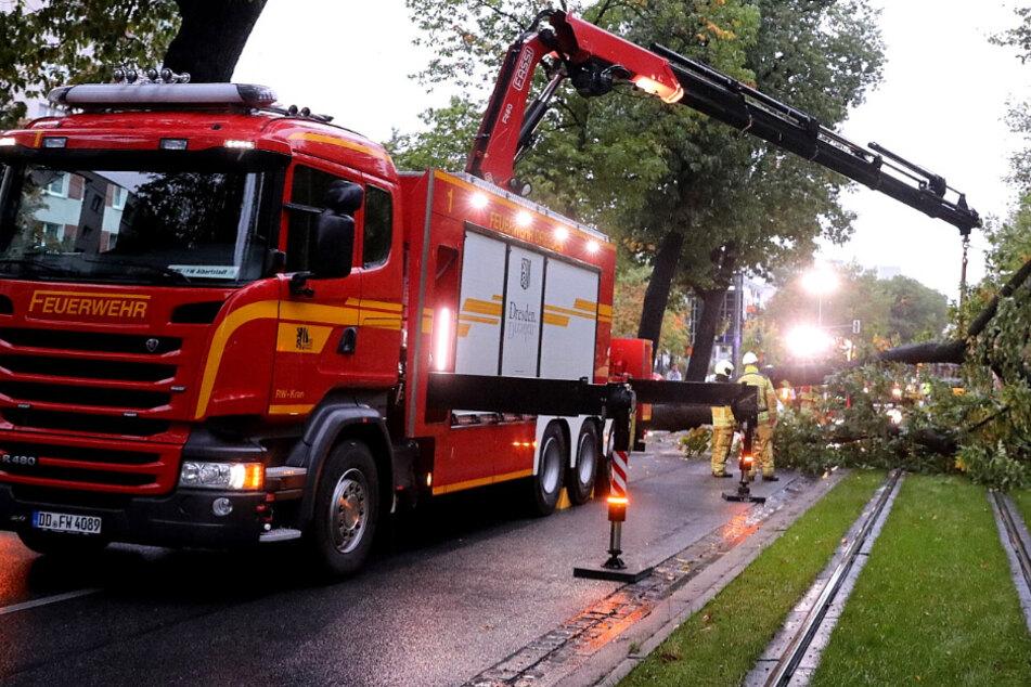 Stau auf der Stübelallee: Baum stürzt auf Fahrbahn, auch DVB-Kunden betroffen
