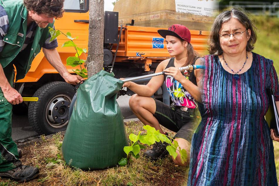 Dresdner Bäume verlieren Blätter viel zu früh: Wie können wir unsere Bäume retten?