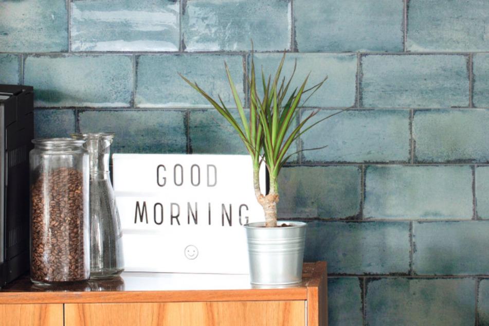 Ihr wollt Eure Wohnung verschönern? Dann solltet Ihr hier bestellen