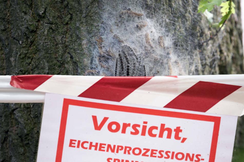 Vorsicht! Gefährlicher Schädling breitet sich in Hessen weiter aus