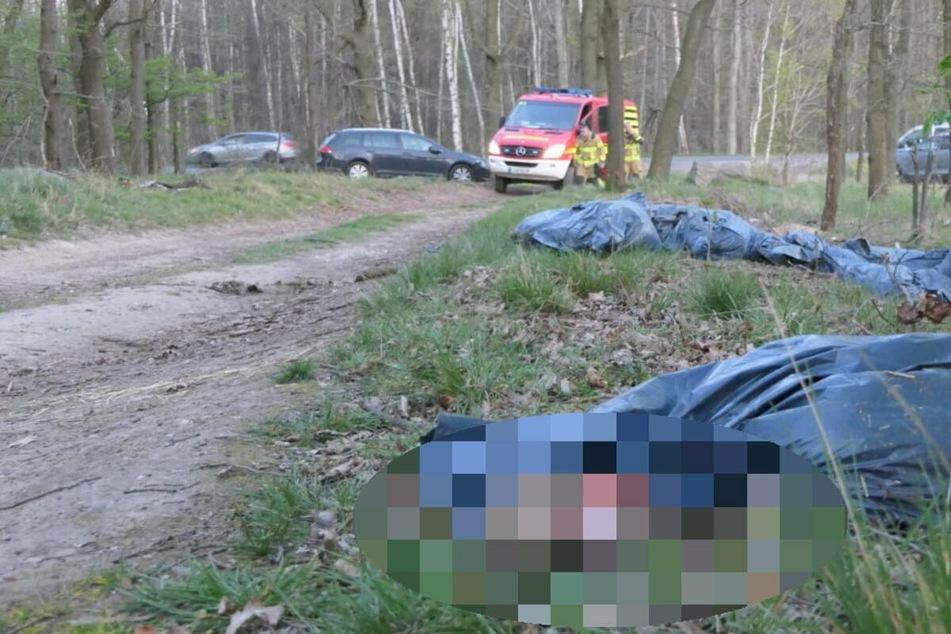 Leipzig: Tote Lämmer in Grimma: PETA setzt Kopfgeld auf Tierquäler aus