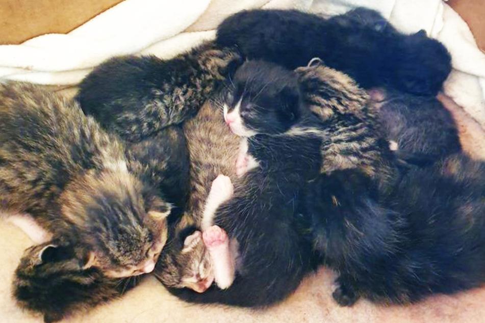 Neun süße Katzenbabys ausgesetzt: Wer macht denn sowas?