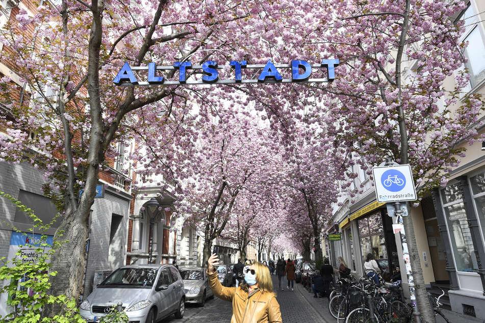 Kirschblüte in der Bonner Altstadt: Maskenpflicht wird verlängert!
