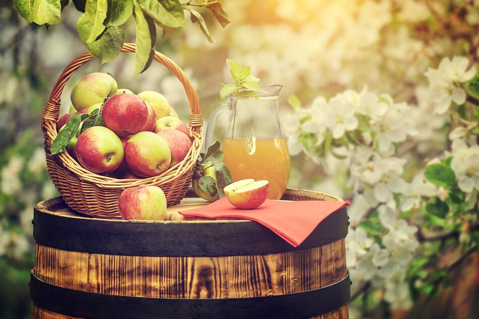 In der Naturschutzstation Pobershau könnt Ihr Eure Äpfel bestimmen lassen.