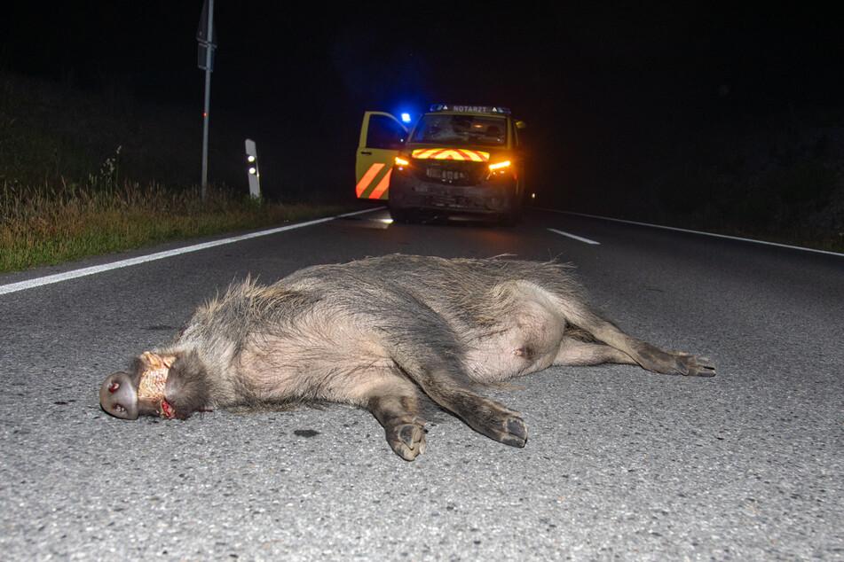 Das tote Schwarzwild liegt vor dem Notarzt auf der Straße.