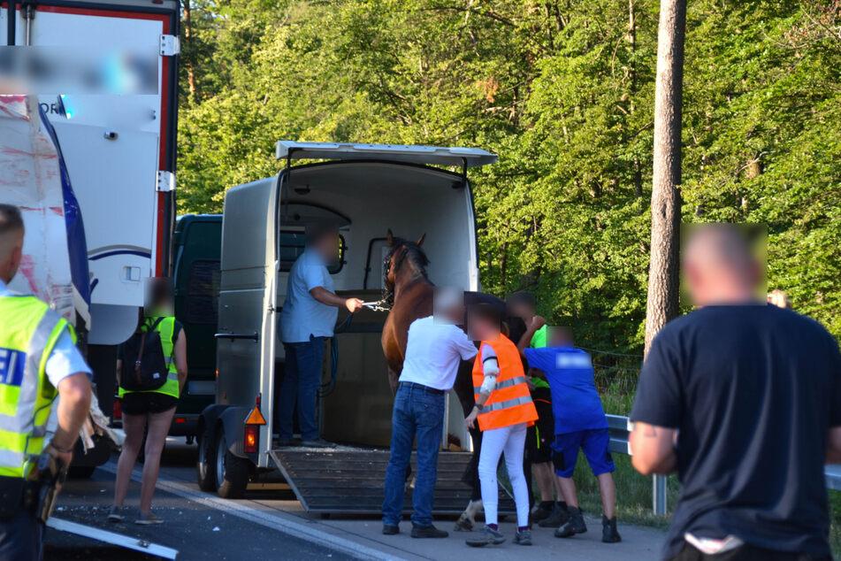 Nach dem Unfall: Das Pferd muss umgeladen werden.