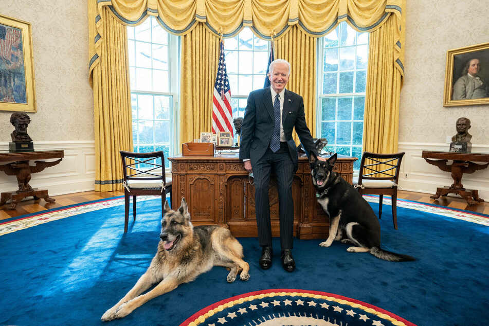 German shepherds Champ (l.) and Major (r.) are the first pets in the White House in four years – and the first rescue dogs ever.