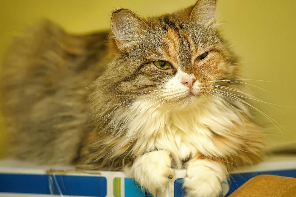 Familie glaubt, ihre tote Katze einzuäschern: Dabei unterläuft ihnen ein schwerer Fehler!