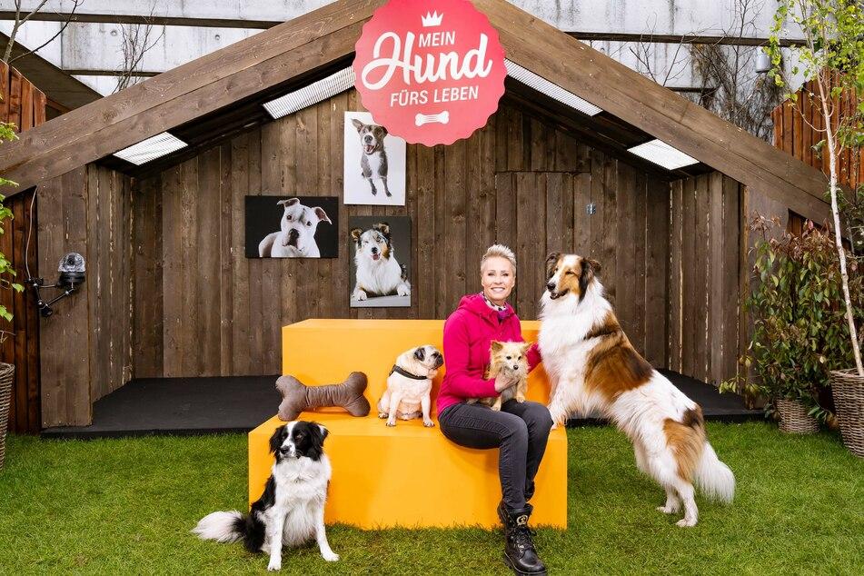 """Sonja Zietlow (53) präsentiert ab Juni die neue ZDF-Sendung """"Mein Hund fürs Leben""""."""